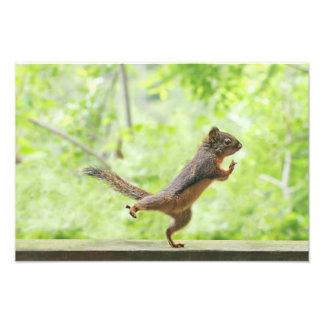 Esquilo bonito que faz o qui da TAI Impressão De Foto