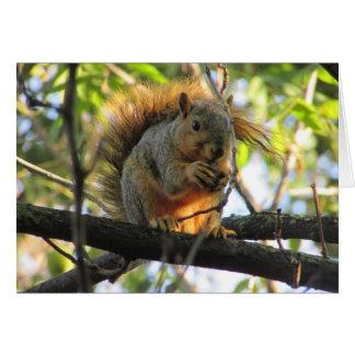Esquilo bonito que guardara o cartão vazio da