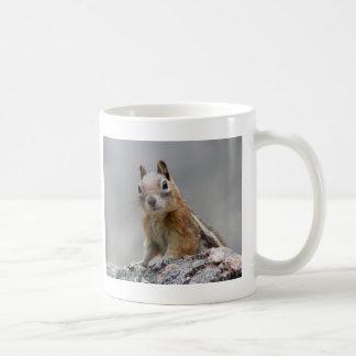 esquilo caneca de café