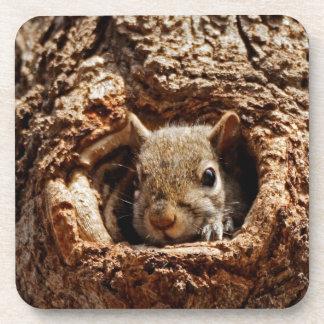 Esquilo cinzento em uma porta copos do furo