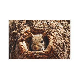Esquilo cinzento em umas canvas do furo