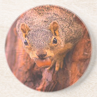 Esquilo com porta copos da porca