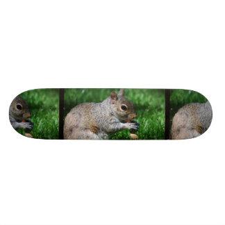Esquilo com skate da porca