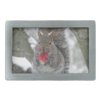 Esquilo da morango