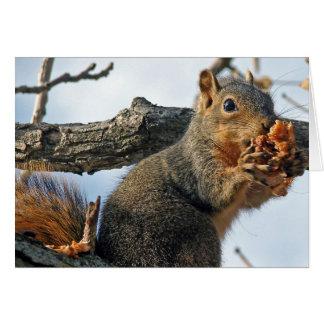 Esquilo da páscoa cartão comemorativo