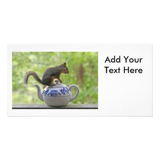 Esquilo e bule cartões com fotos