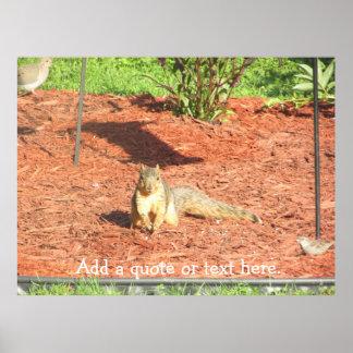 Esquilo engraçado poster personalizado pôster