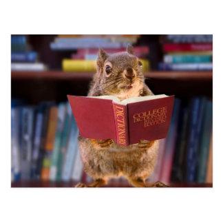Esquilo esperto que lê um dicionário cartão postal