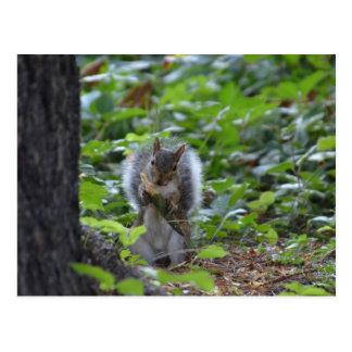 Esquilo feliz que tem o cartão do pequeno almoço cartão postal