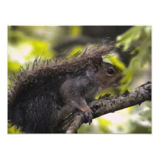 Esquilo Impressão De Foto