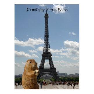 Esquilo no cartão de Paris