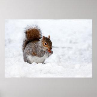 Esquilo no inverno pôsteres