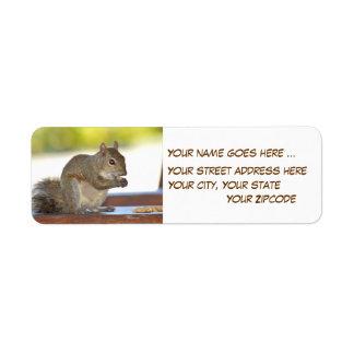 Esquilo que come etiquetas de endereço do remetent