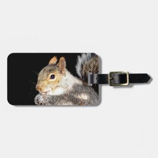 Esquilo que come uma porca etiqueta de bagagem
