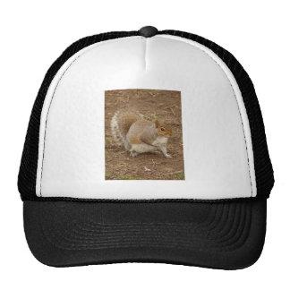 Esquilo que levanta para uma imagem boné