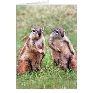 Esquilos gêmeos cartao