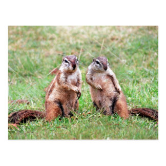 Esquilos gêmeos cartão postal
