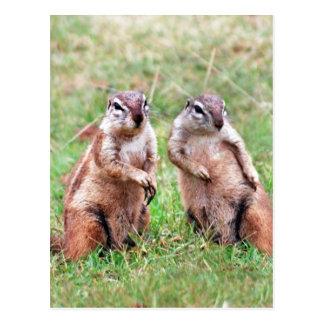Esquilos gêmeos cartoes postais