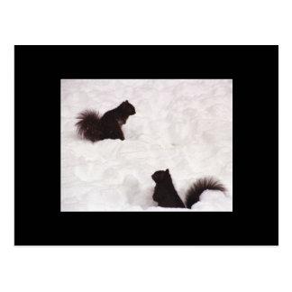 Esquilos no cartão da neve