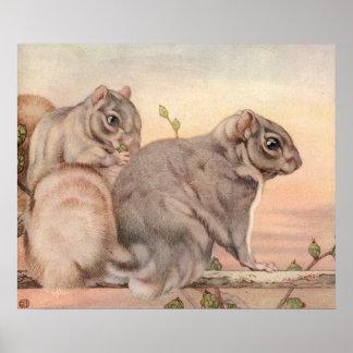 Esquilos por E.J. Detmold Poster