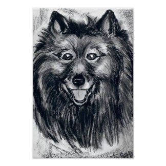 Esse sorriso do Keeshond Poster
