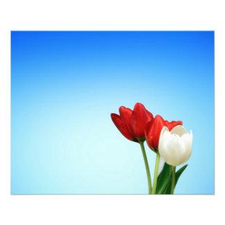 Estética branca vermelha do primavera das tulipas modelos de panfleto