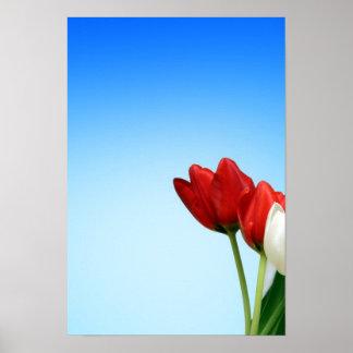 Estética branca vermelha do primavera das tulipas  posters
