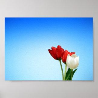 Estética branca vermelha do primavera das tulipas posteres