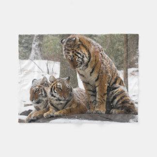 Esticando o tigre cobertor de lã