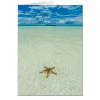 Estrela de mar na água pouco profunda, Palau Cartão Comemorativo