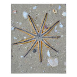 Estrela do mar impressão de foto