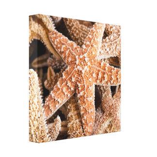 Estrela do mar nas canvas da praia