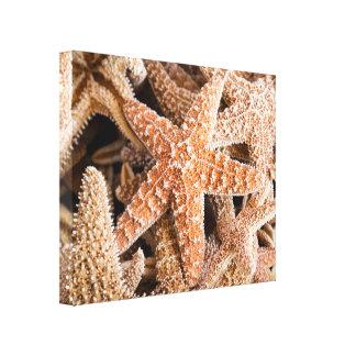 Estrela do mar no impressão das canvas da praia