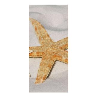 Estrela do mar planfeto informativo colorido