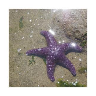 Estrela roxa do ocre - canvas