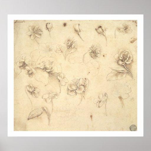 Estudo das flores Grama-como de plantas (Briza M Posters