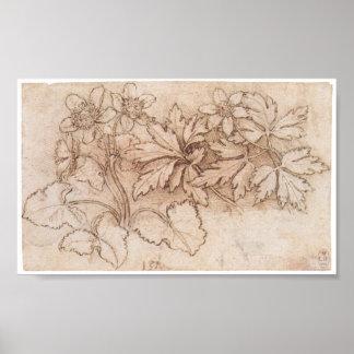 Estudo de duas plantas, Leonardo da Vinci Impressão