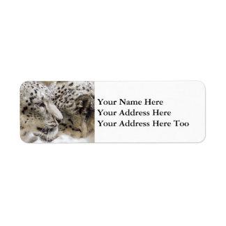 Etiqueta Afago do leopardo de neve