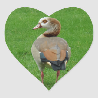 Etiqueta agradável do coração do pássaro adesivo coração