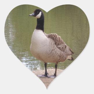 Etiqueta agradável do coração do pássaro & da adesivo coração