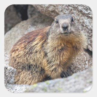 Etiqueta alpina da marmota