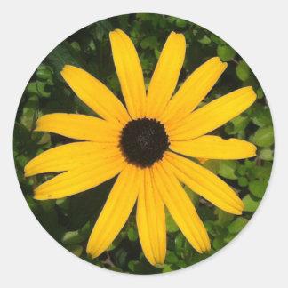 Etiqueta amarela da foto da margarida