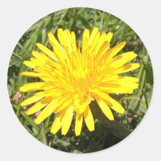 Etiqueta amarela da foto da natureza da flor do