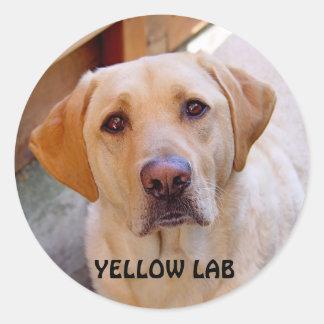 Etiqueta amarela do laboratório adesivos em formato redondos