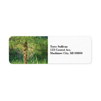 Etiqueta Árvore de vidoeiro