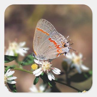 Etiqueta azul obscura da borboleta de Hairstreak