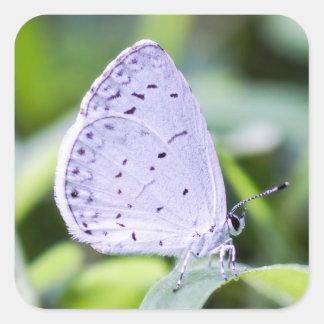 Etiqueta Azure da borboleta do primavera