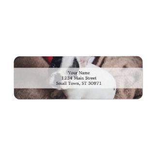 Etiqueta Cão de Papai Noel - pug engraçado - persiga claus