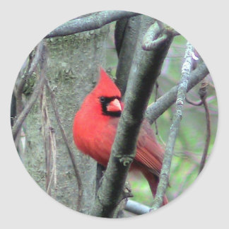 Etiqueta cardinal masculina da foto