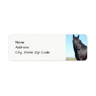 Etiqueta Cavalo preto e o céu azul